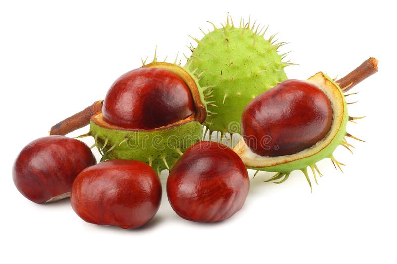 Chestnuts isolated on white background. Healthy background. stock images