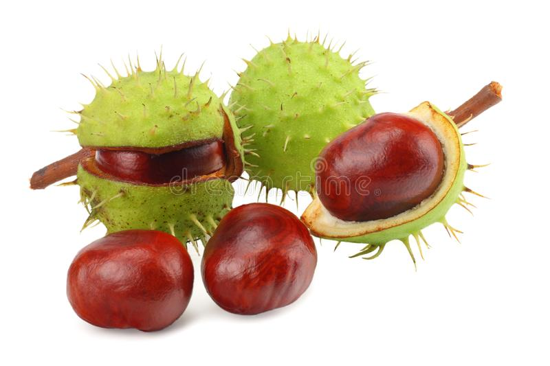 Chestnuts isolated on white background. Healthy background. stock image