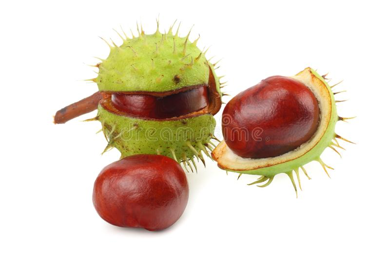 Chestnuts isolated on white background. Healthy background. stock photography