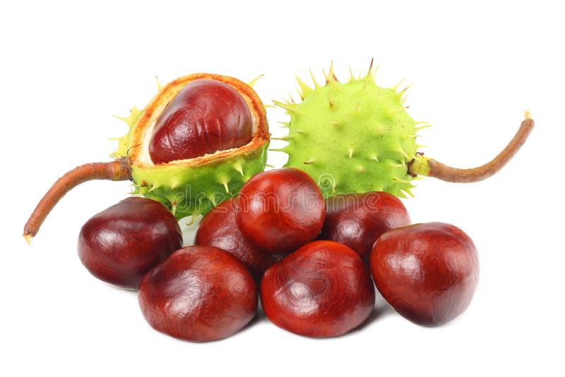Chestnuts isolated on white background. Healthy background. Healthy food royalty free stock photography