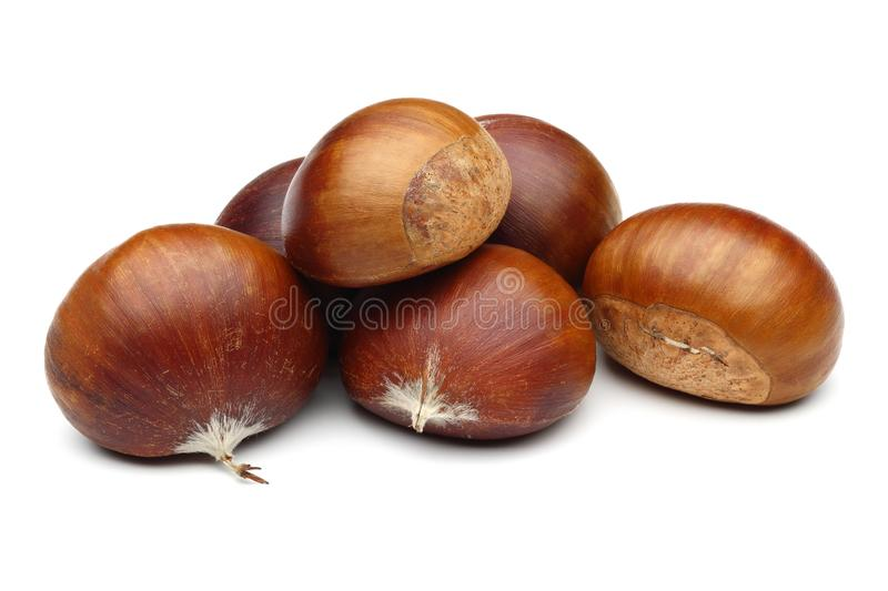 Chestnuts isolated on white background. Studio shot stock image