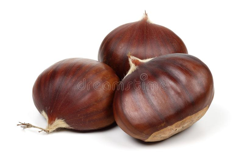 Chestnuts isolated on white background. Studio shot stock photography
