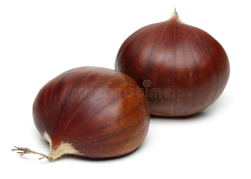 Chestnuts isolated on white background. Studio shot royalty free stock images