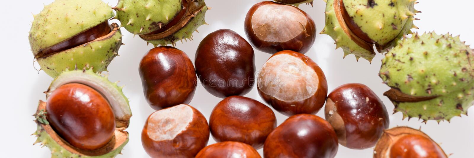 Chestnuts isolated on white, fruits chestnut, Panoramic image. Chestnuts isolated on white, fruits chestnut, Aesculus hippocastanum. Panoramic image stock image
