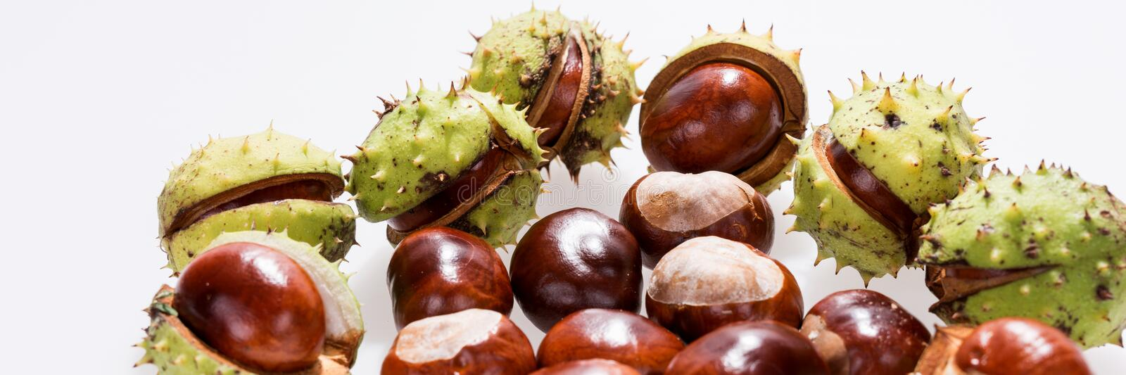 Chestnuts isolated on white, fruits chestnut, Panoramic image. Chestnuts isolated on white, fruits chestnut, Aesculus hippocastanum. Panoramic image royalty free stock photography