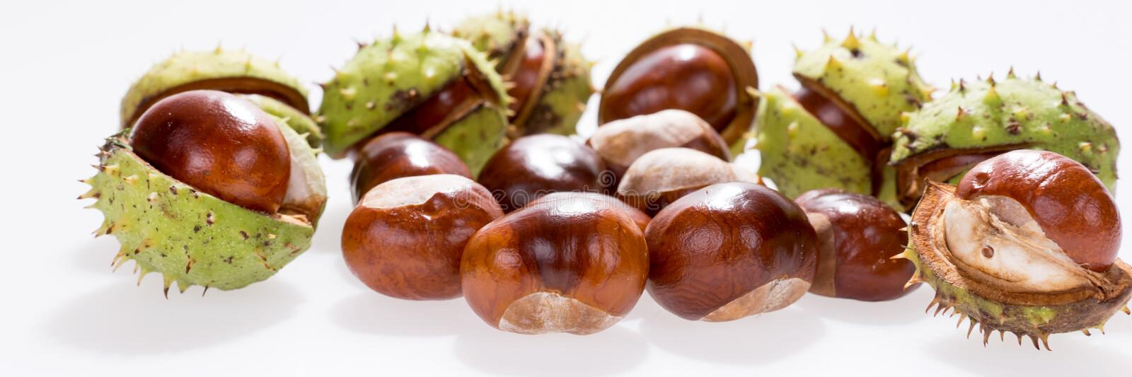 Chestnuts isolated on white, fruits chestnut, Panoramic image. Chestnuts isolated on white, fruits chestnut, Aesculus hippocastanum. Panoramic image royalty free stock photos