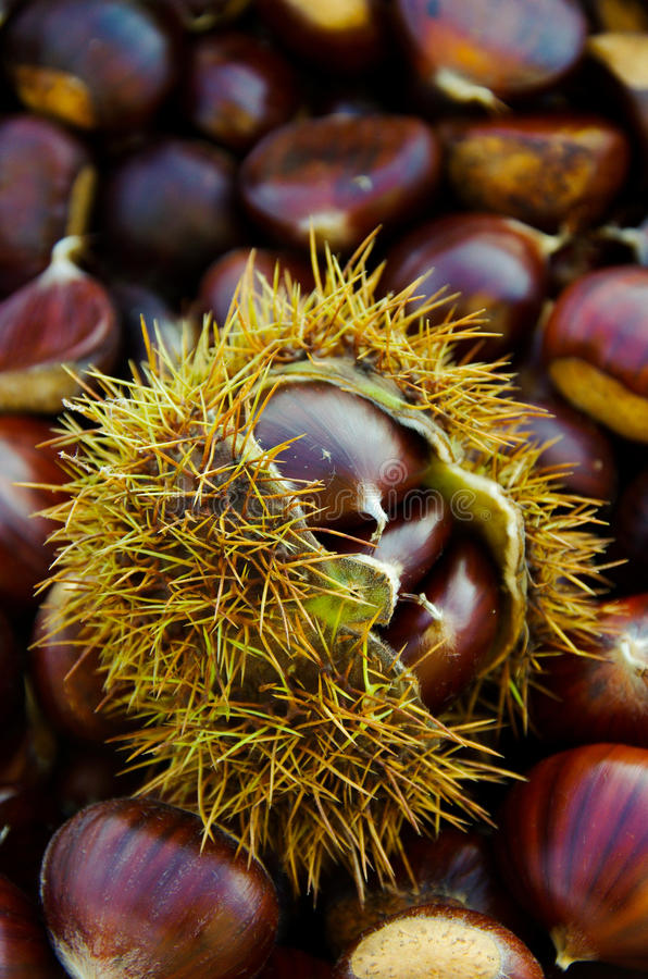 Chestnuts on natural background stock image