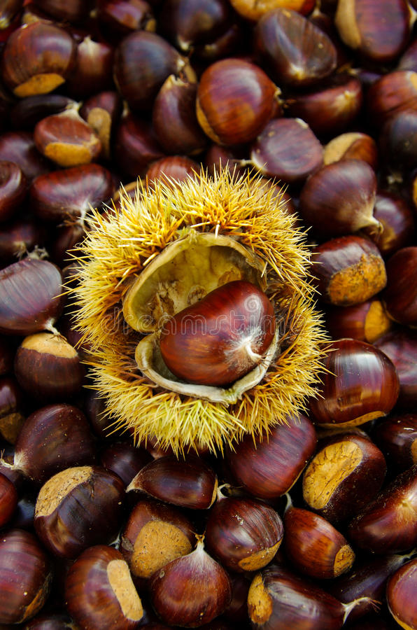 Chestnuts on natural background royalty free stock image