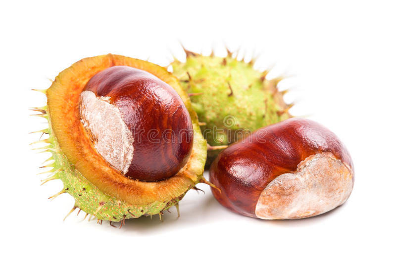 Chestnuts with peel on a white background. Closeup stock photography