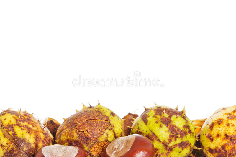 Chestnuts with room for text. Closeup of many chestnuts over a white background with room for text stock images