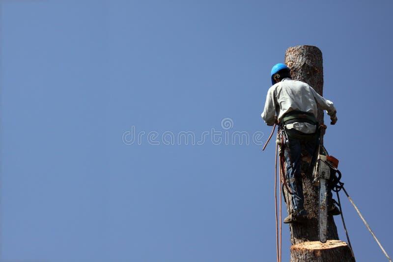 Chevêtre dangereux d'arbre des travaux photo stock