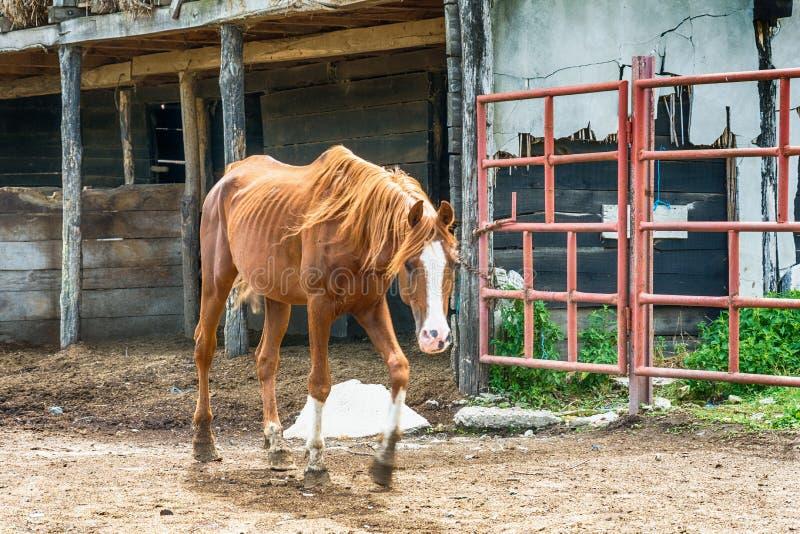 Cheval à la ferme photos libres de droits