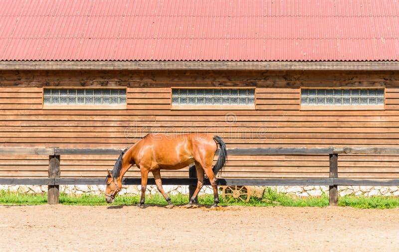 Cheval à une ferme photo libre de droits