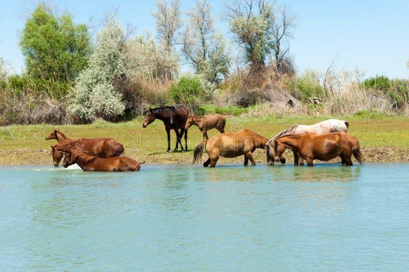 cheval, équin, canasson, hoss, entaille, cheval de trait photographie stock