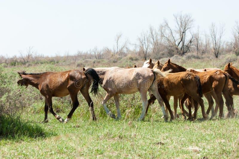cheval, équin, canasson, hoss, entaille, cheval de trait photo libre de droits