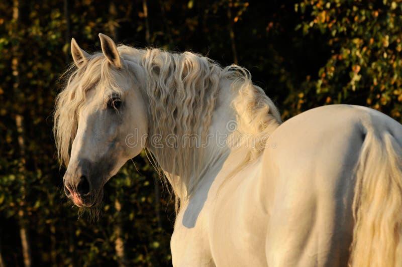 cheval λευκό αλόγων φθινοπώρο&up στοκ εικόνες
