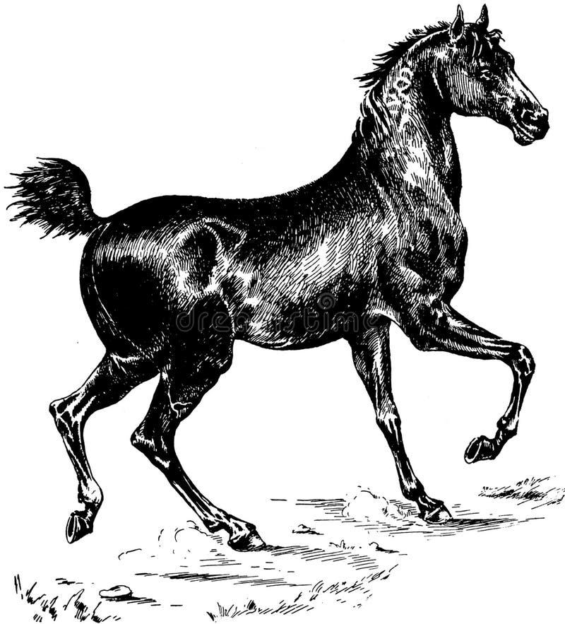 Cheval-051 Free Public Domain Cc0 Image