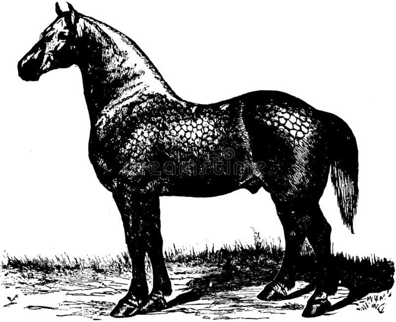 Cheval-055 Free Public Domain Cc0 Image