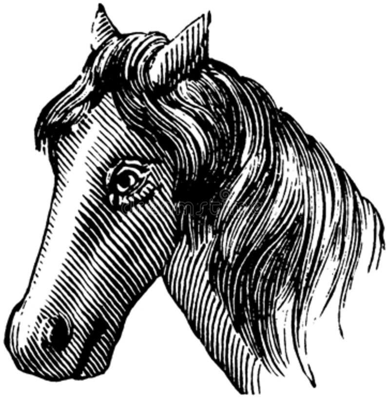 Cheval-059 Free Public Domain Cc0 Image