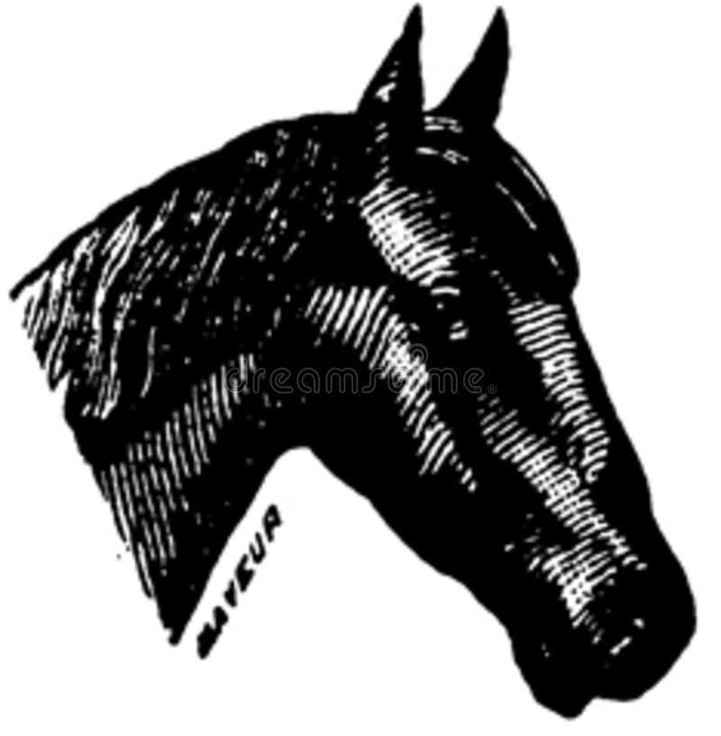 Cheval-061 Free Public Domain Cc0 Image