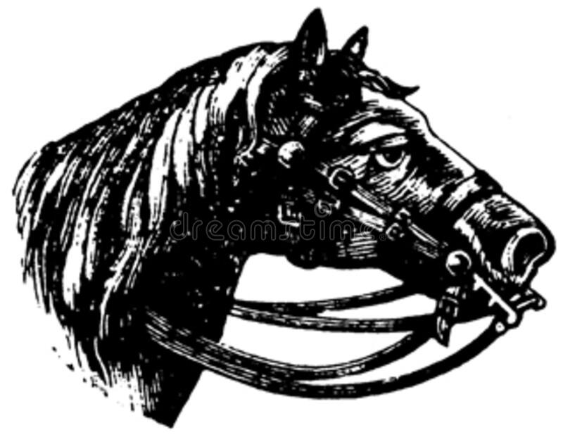 Cheval-063 Free Public Domain Cc0 Image