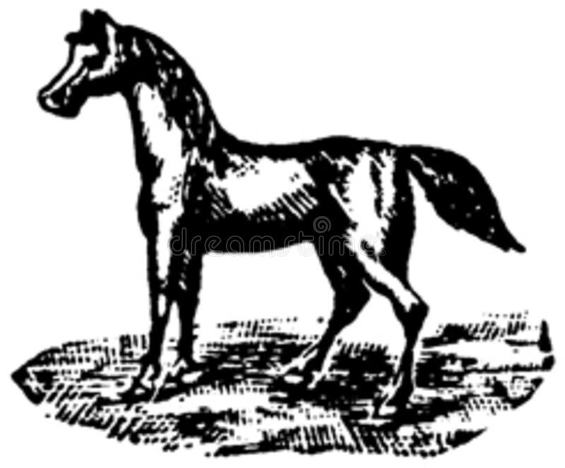 Cheval-069 Free Public Domain Cc0 Image