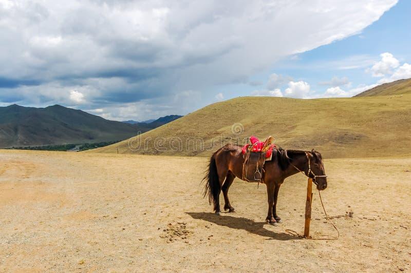 Cheval attaché solitaire en Mongolie photo stock