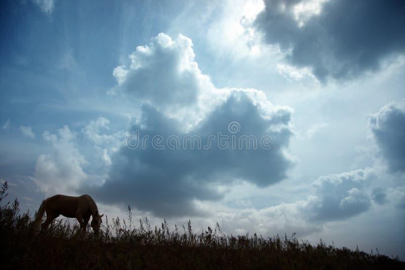 Cheval au coucher du soleil foncé images libres de droits
