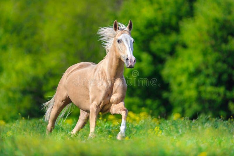 Cheval avec la crinière blonde photo stock