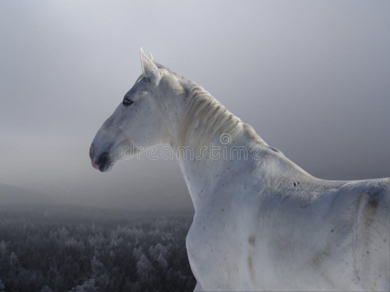 Cheval blanc illustration de vecteur