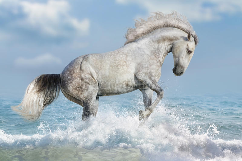 Cheval blanc dans l'eau photo stock