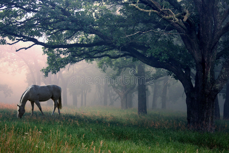 Cheval blanc dans le brouillard images libres de droits