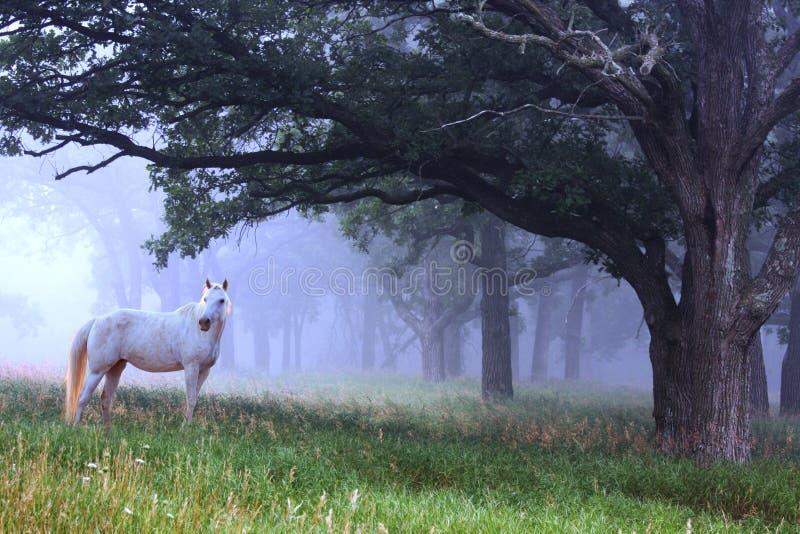 Cheval blanc dans le brouillard bleu photos stock