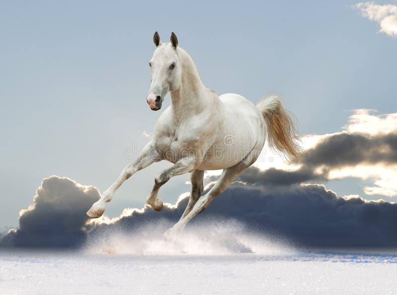 Cheval blanc dans le ciel image stock