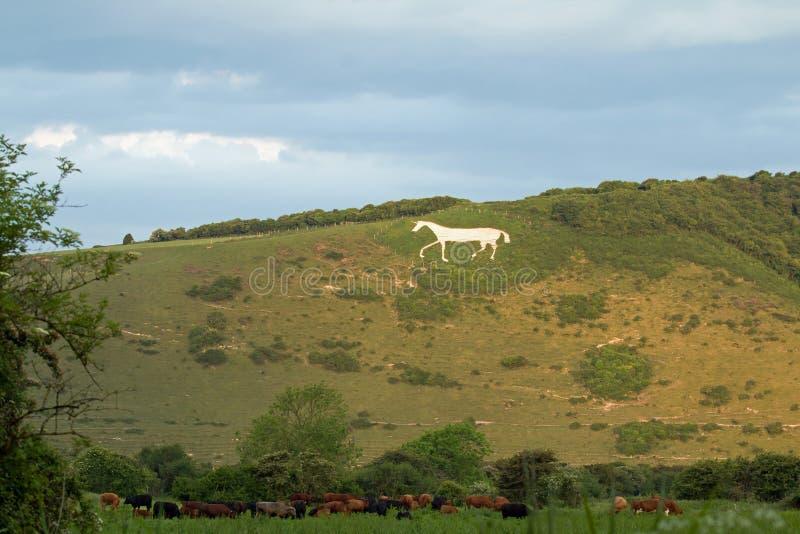Cheval blanc de Litlington image libre de droits