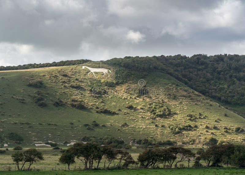 Cheval blanc de Litlington en vallée de Cuckmere près d'Eastbourne photos stock