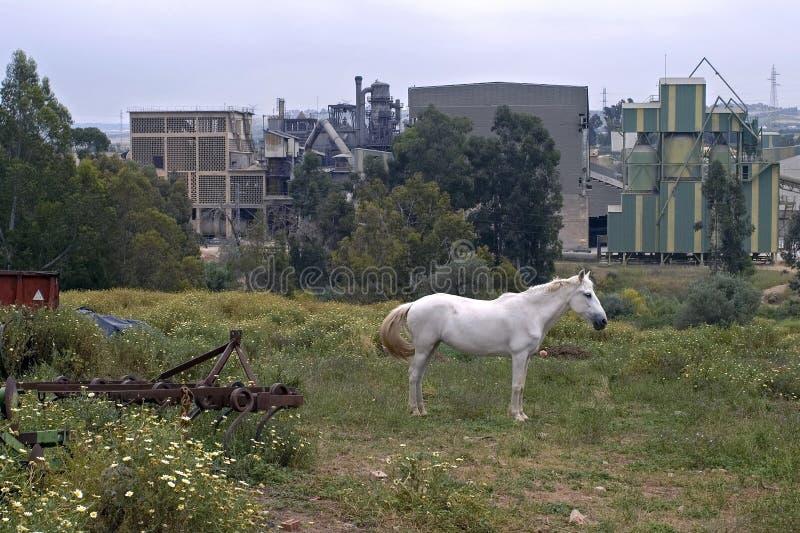 Cheval blanc devant l'usine fonctionnante de ciment image libre de droits