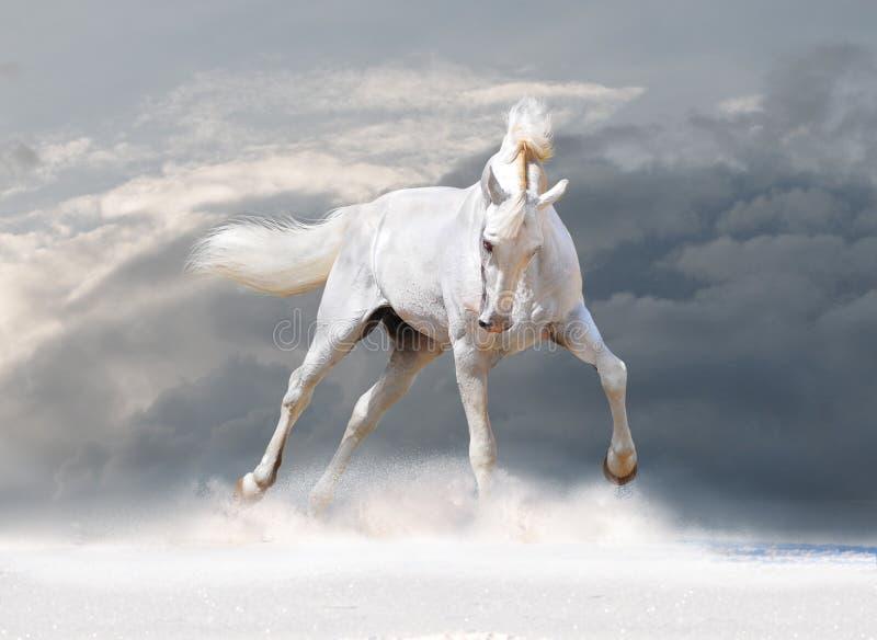 Cheval blanc en hiver photographie stock libre de droits