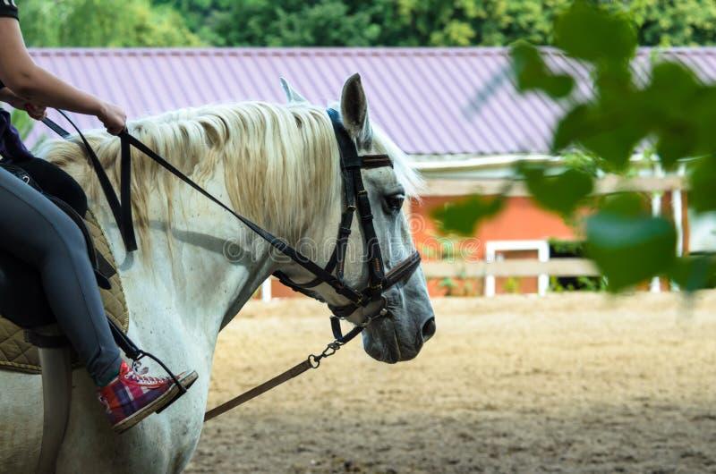 Cheval blanc et chariot à la ferme photographie stock libre de droits