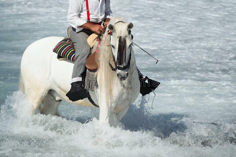Cheval blanc fonctionnant dans l'océan images stock