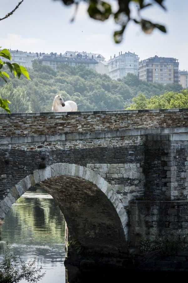 Cheval blanc marchant sur un pont romain antique au-dessus d'une rivière à Lugo, Espagne photo stock