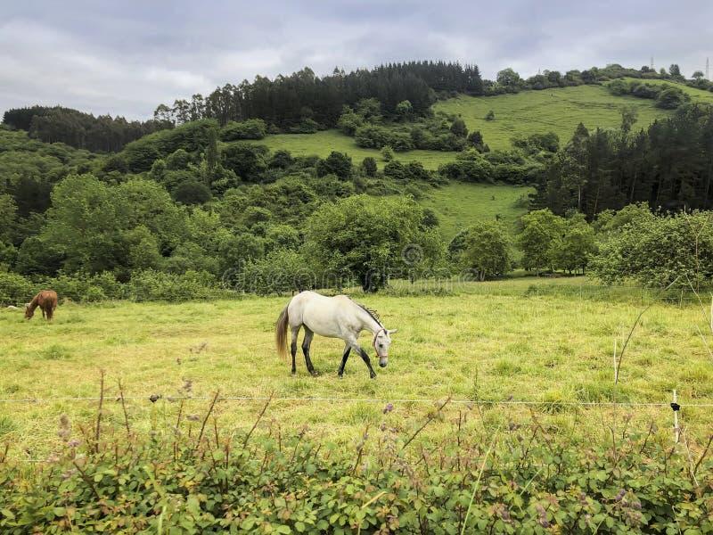 Cheval blanc sur le pâturage vert pittoresque Paysage d'?t? de pays photographie stock