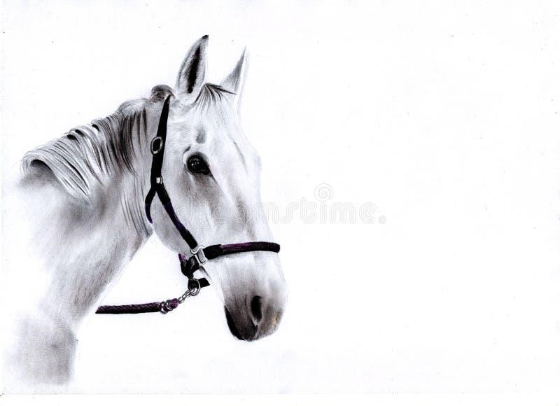 Cheval blanc tiré par la main illustration libre de droits