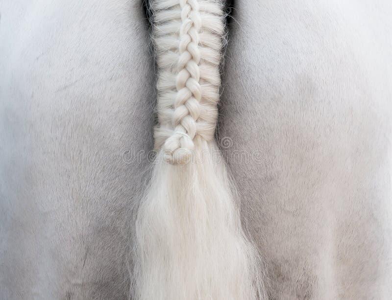 Cheval blanc : une queue de tresse photo stock