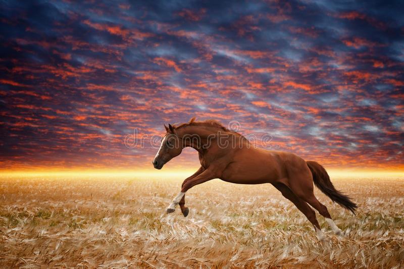 Cheval courant photographie stock