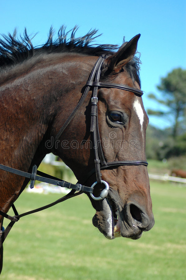 Cheval d'action photo stock