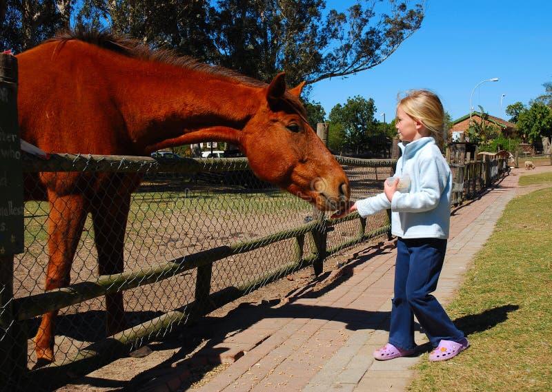 cheval d'alimentation des enfants images stock