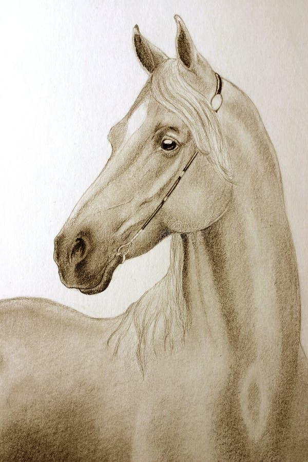 Cheval d'Arabe de crayon illustration de vecteur