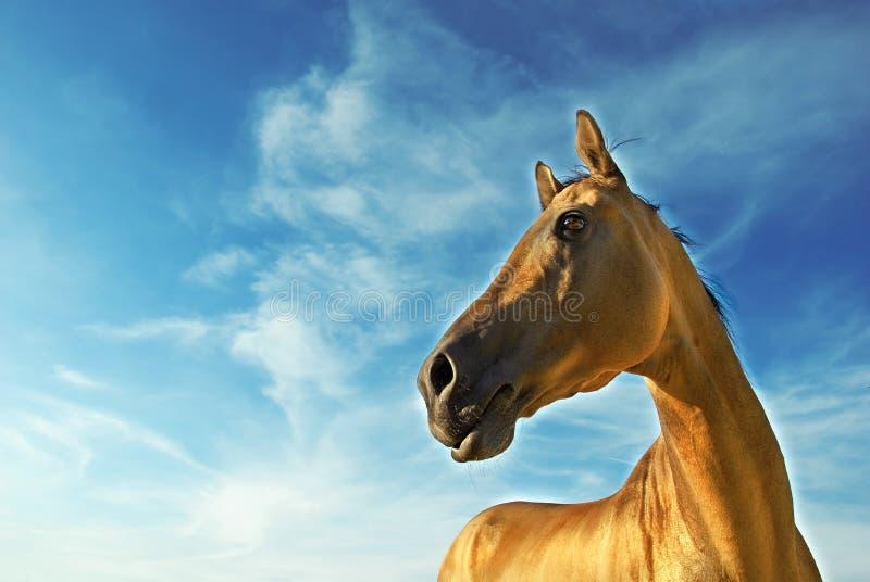 Cheval d'or de Turkmenistan 3 photos stock