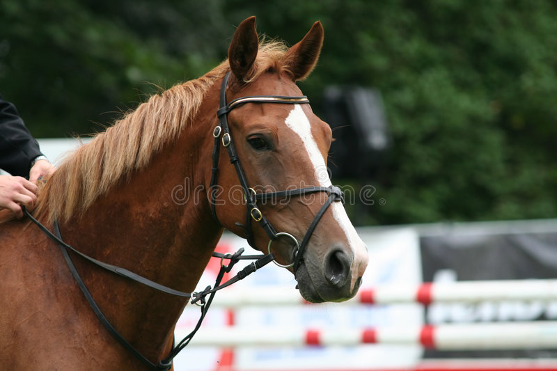 Cheval d'emballage image stock
